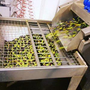 Olivenöl Ernte und Herstellung_f